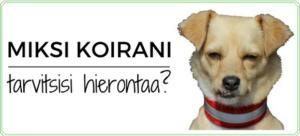 Miksi koirani tarvitsisi hierontaa?