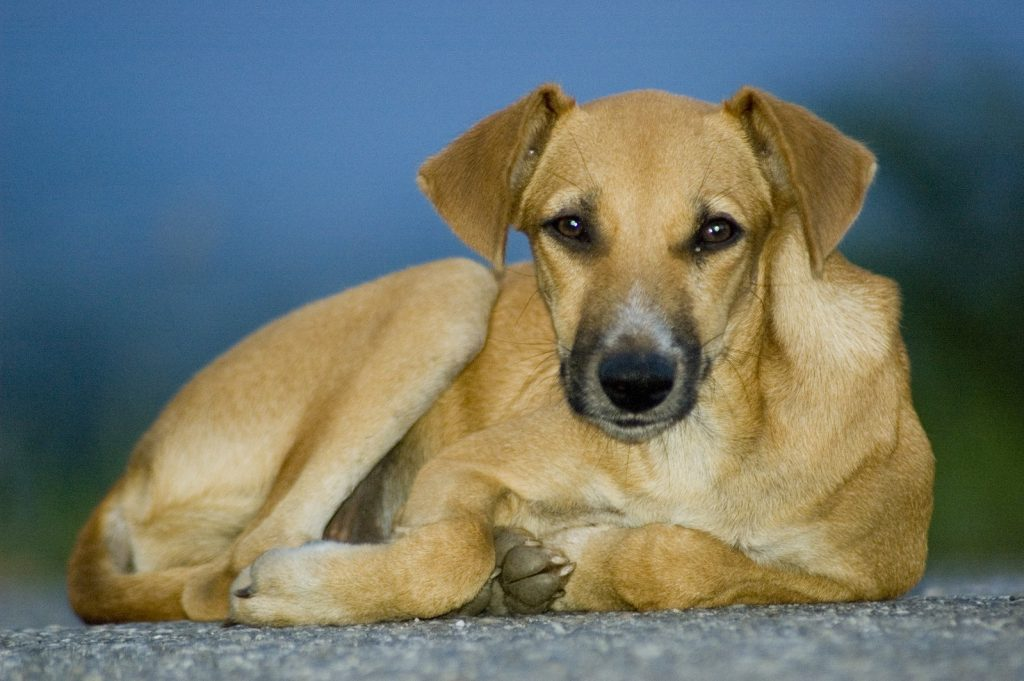 Tarvitseeko koirasi jatkuvasti kehohoitoa (hierontaa)? Haluaisitko koirasi saavan maksutta hoitoa? Hakeudu kummikoiraksi :)